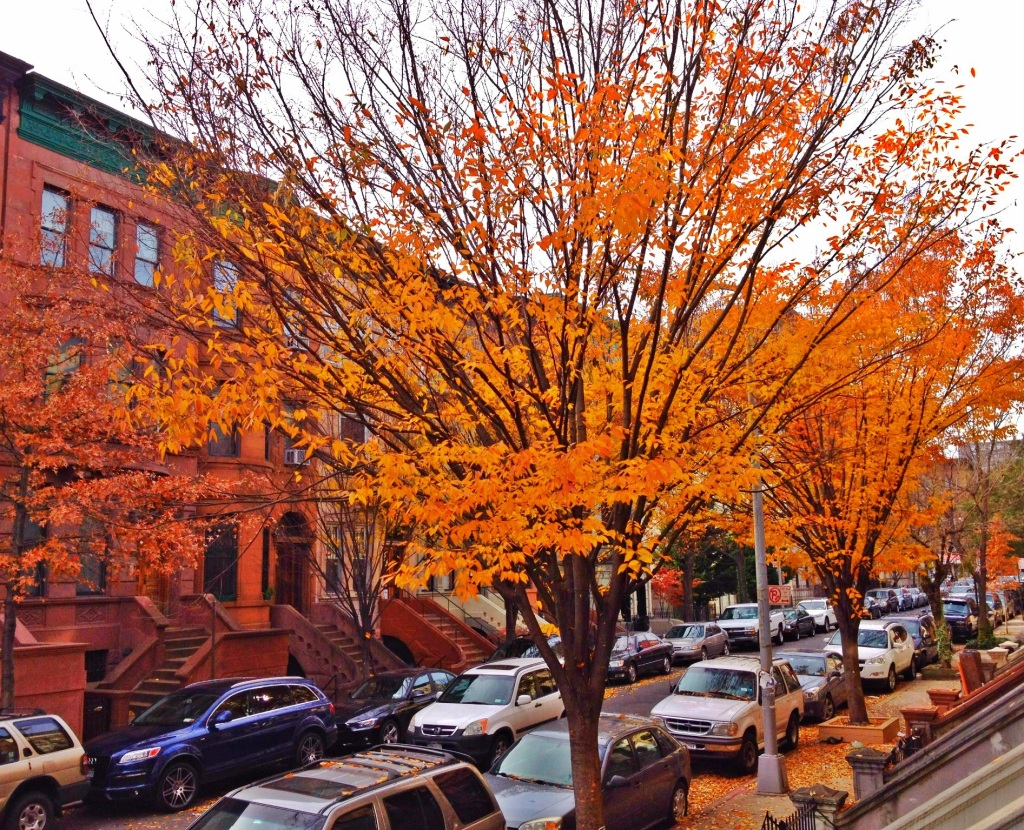 Harlem townhouses in Autumn